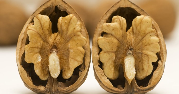 How-Walnuts-Can-Boost-Fertility-and-17-Other-Healthy-Reasons
