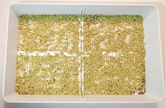Spread the seeds evenly across the sprouting container