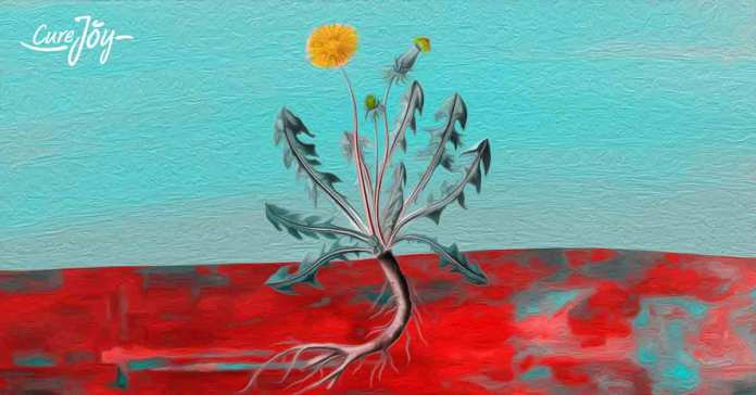 can dandelion root help prevent and treat cancer