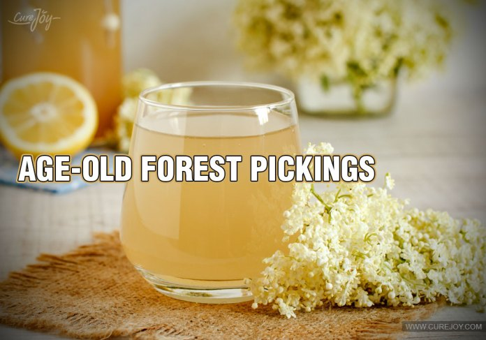 10-age-old-forest-pickings
