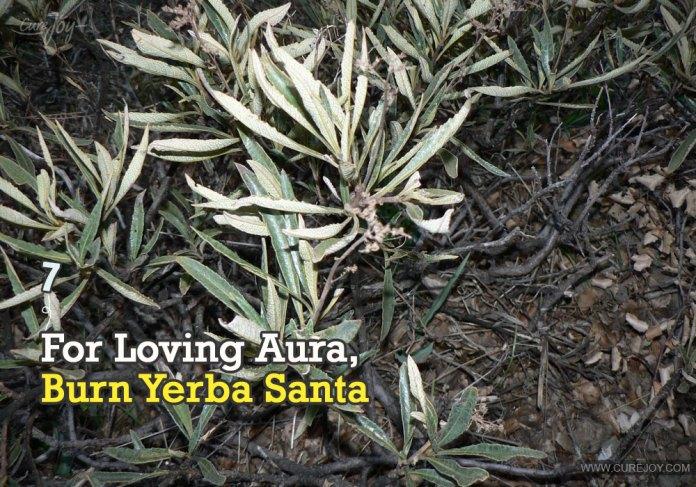 7-for-loving-aura-burn-yerba-santa
