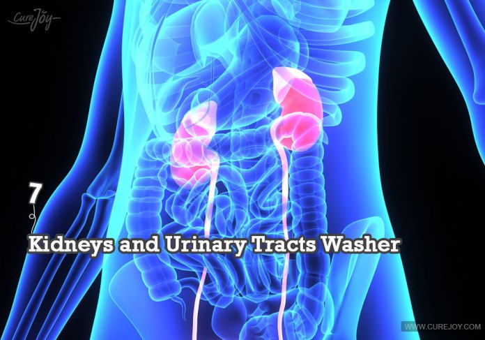 7-kidneys-and-urinary-tracts-washer