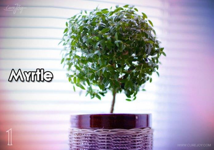 1-myrtle