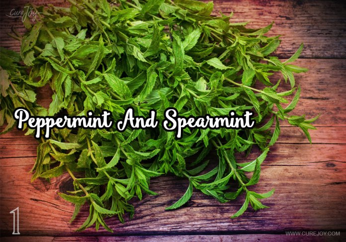 1-peppermint-and-spearmint