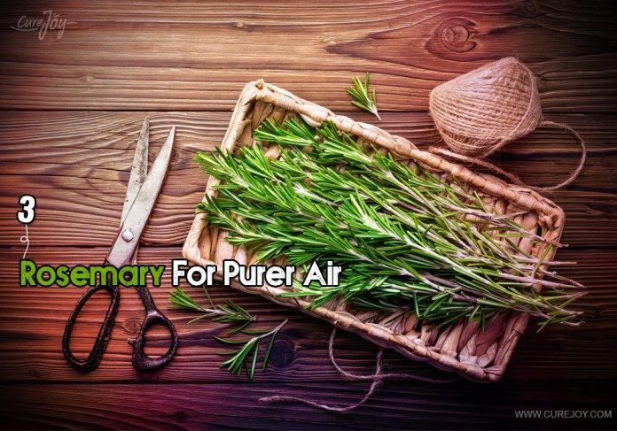 3-rosemary-for-purer-air