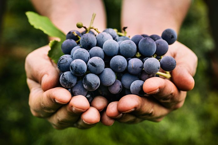 Grapes: 9 Best Winter Fruits: Why Should You Eat!