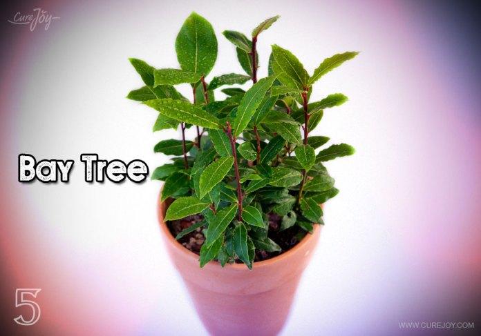 5-bay-tree