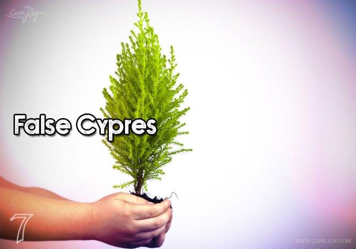 7-false-cypres