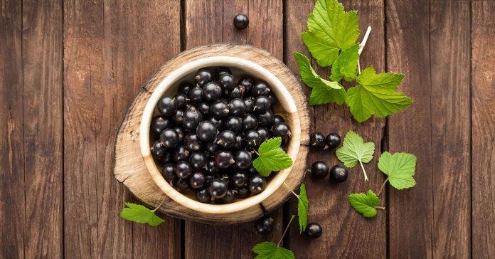 benefits of black currant oil