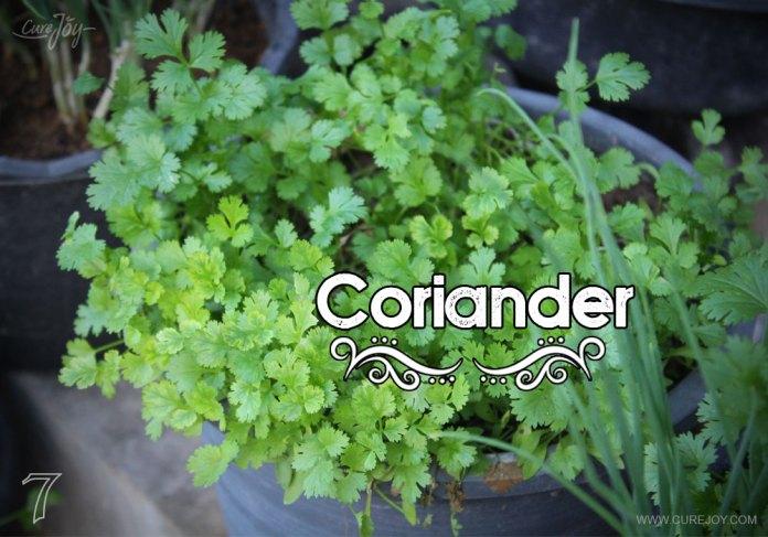 7-coriander