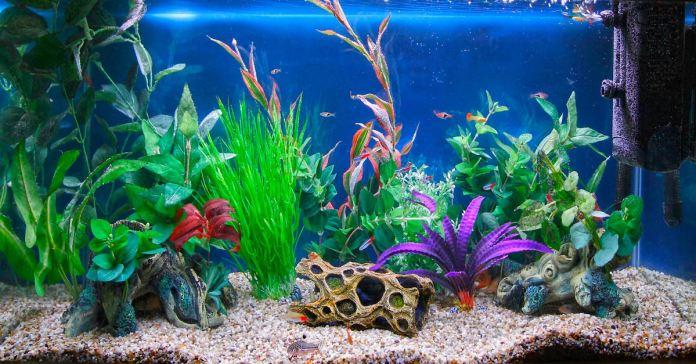 benefits of keeping an aquarium