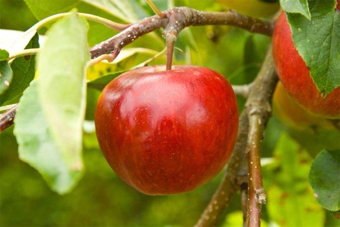 fruit peels you can eat
