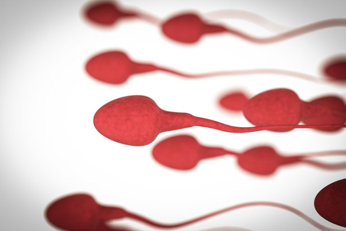 Decreased Sperm Vitality: Effects Of Weed On Sperm