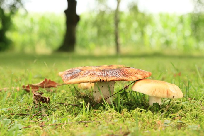 Poisonous Mushrooms You Should Stay Away From