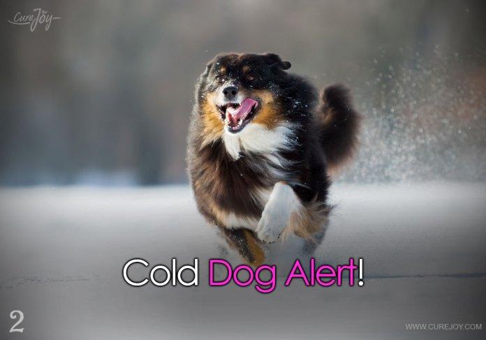 2-cold-dog-alert