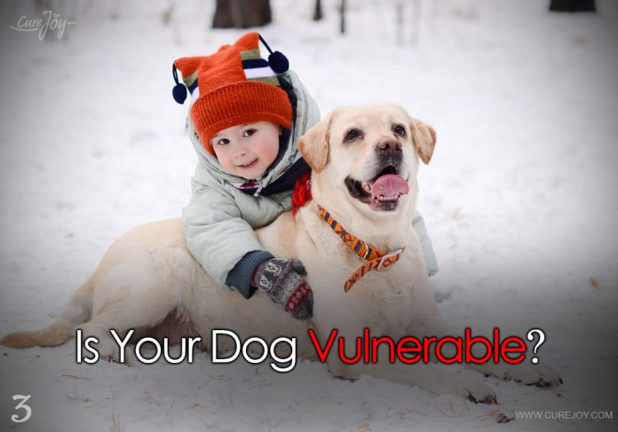 3-is-your-dog-vulnerable