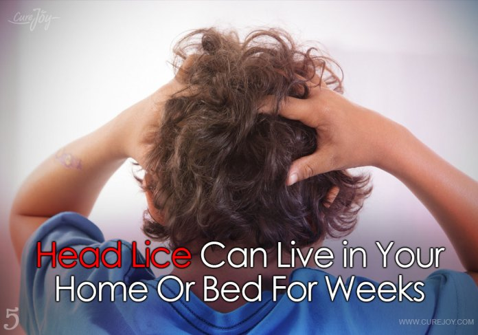 5-head-lice-can-live-in-your