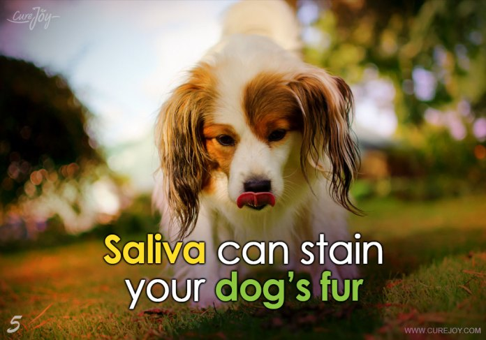 5-saliva-can-stain