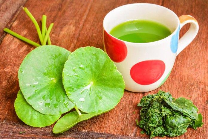 Gotu Kola Helps Get Rid Of Cellulite