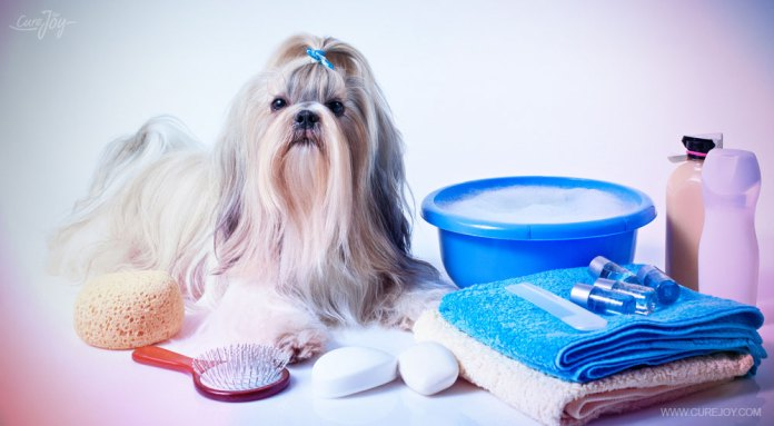 5-make-sure-you-have-everything-you-need-before-you-get-your-dog-wet