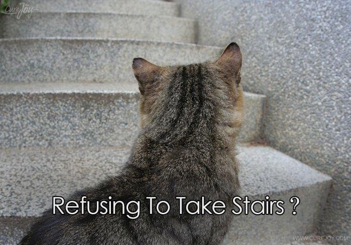 5-refusing-to-take-stairs