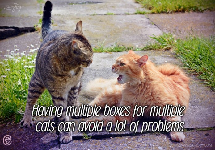 6-having-multiple-boxes-for-multiple-cats-can-avoid-a-lot-of-problems
