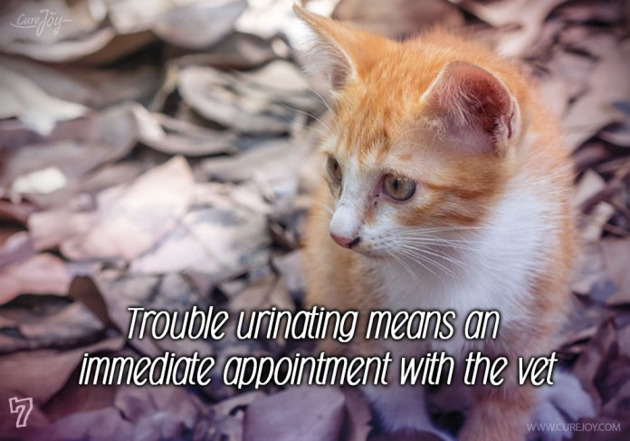 7-trouble-urinating-means-an-immediate-appointment-with-the-vet