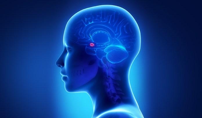 Amygdala_Can Depression Cause Brain Damage