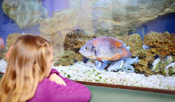Aquarium Has A Calming Effect On The Brain