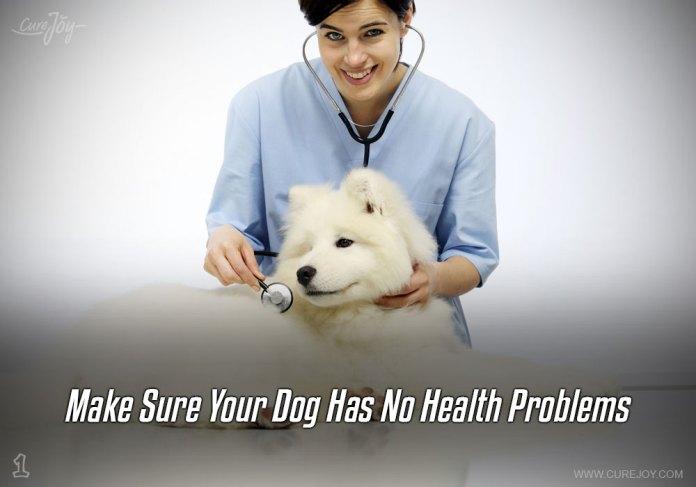 1-make-sure-your-dog-has-no-health-problems