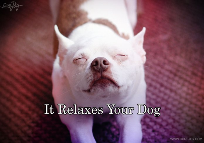 2-it-relaxes-your-dog