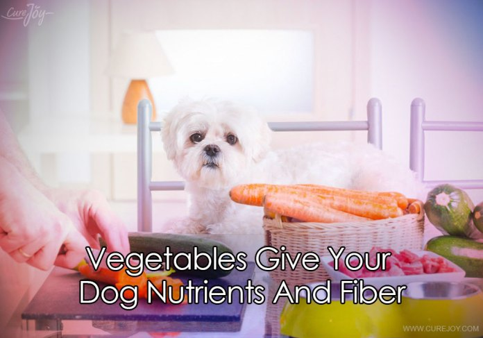 2-vegetables-give-your-dog-nutrients-and-fiber