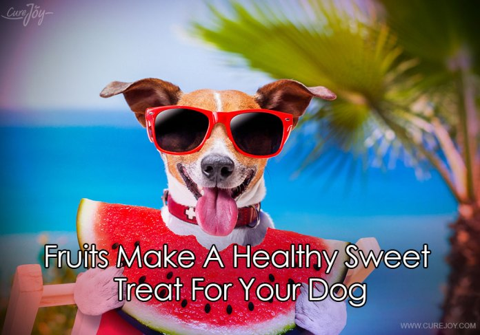3-fruits-make-a-healthy-sweet-treat-for-your-dog