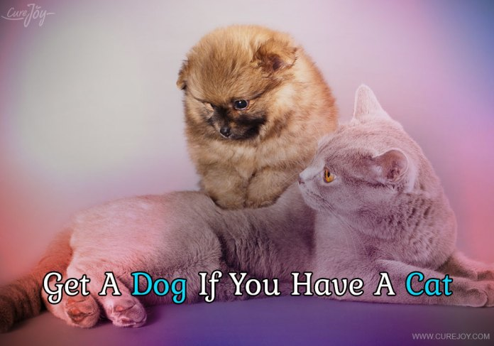 3-get-a-dog-if-you-have-a-cat