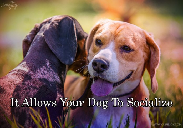 4-it-allows-your-dog-to-socialize