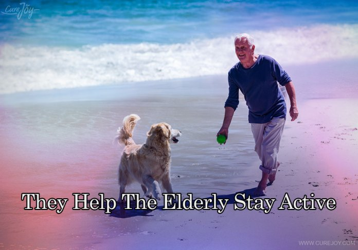 4-they-help-the-elderly-stay-active