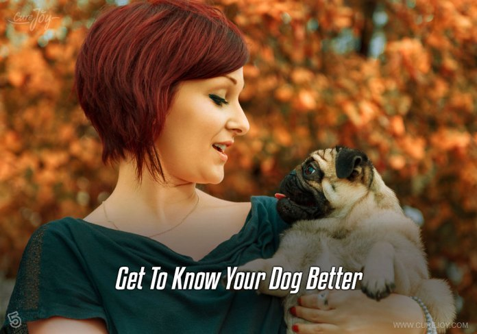 5-get-to-know-your-dog-better