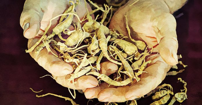 Ginseng has great benefits for men