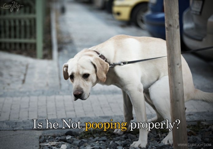 5-is-he-not-pooping-properly