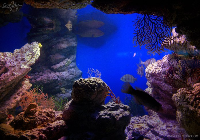 Live rocks and caves found underwater
