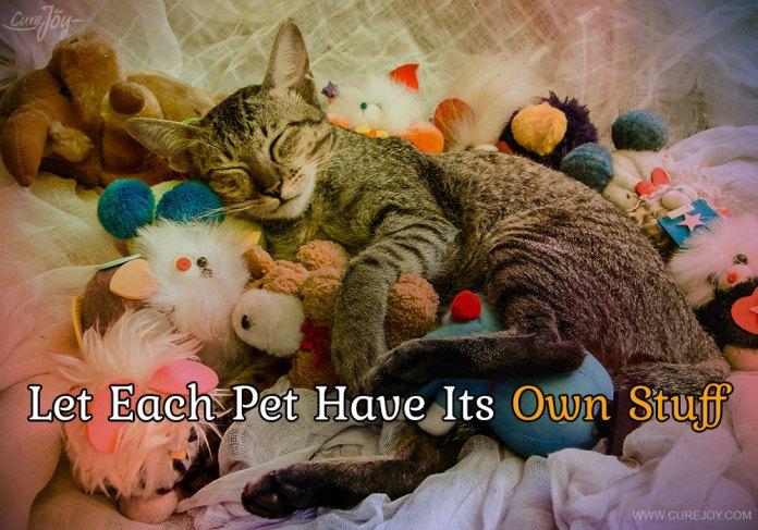 6-let-each-pet-have-its-own-stuff