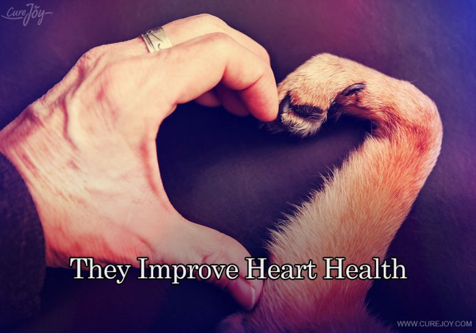 6-they-improve-heart-health