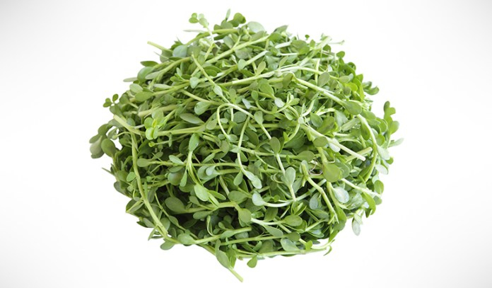 Bacopa monnieri reduces anxiety and mood swings