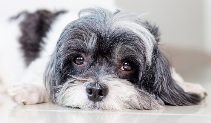 symptoms of dehydration in dogs Behavior changes