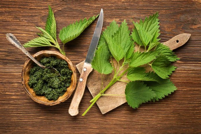 Iron in nettle makes it better to treat anemia