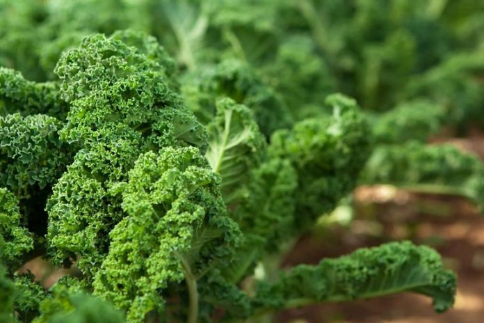 Kale Is Good For Skin