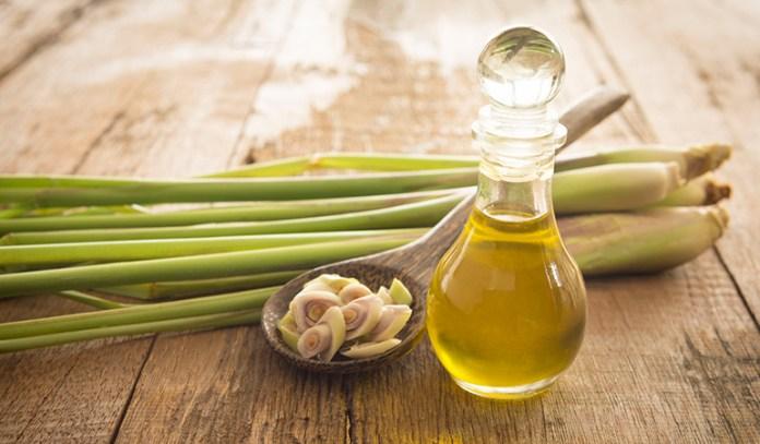 lemongrass oil for receding gums