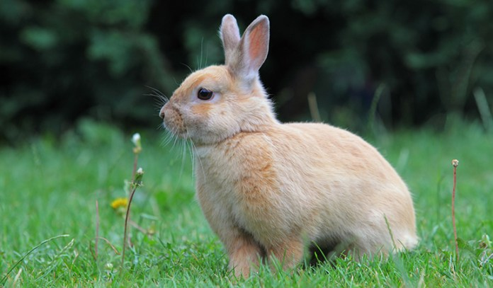 Rabbits and rodents can cause allergies