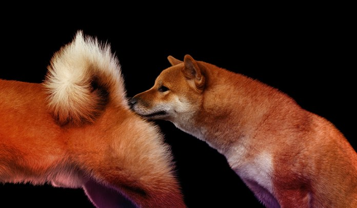 1-sniffs-other-dogs-butts