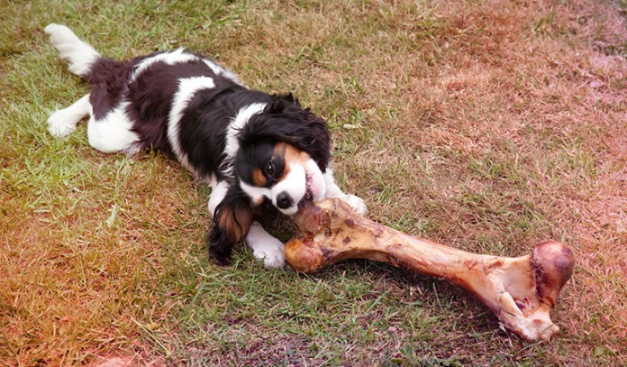 2-you-give-your-dog-bones